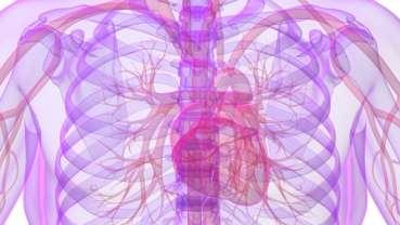 Mund-Infektionen attackieren Blutgefäße