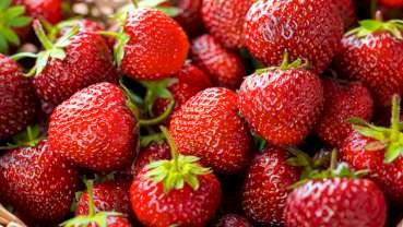 美研究发现草莓在口腔癌症防治当中的作用