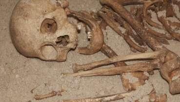Зубной камень неандертальцев свидетельствует о присутствии в их рационе растений