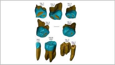 Учени откриха черти, характерни за неандерталците, в древни зъбни останки