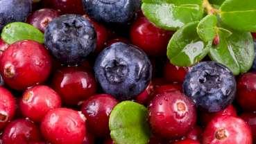 Badania wskazują na potencjał ekstraktu z jagód w zwalczaniu bakterii w jamie ustnej