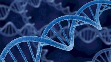Ανθρώπινο DNA σε αρχαία τσίχλα 10.000 ετών