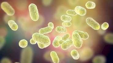 Lek stosowany w chorobie Alzheimera może także zwalczać zakażenia P. gingivalis