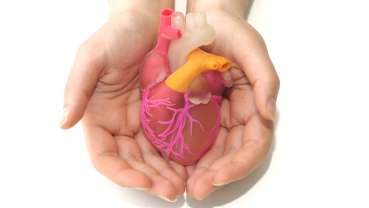 Study results pave way for increase of heart donations