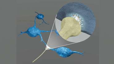 Neurons promote growth of brain tumor cells
